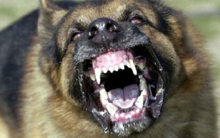 Σκύλος δάγκωσε παιδάκι στο πρόσωπο